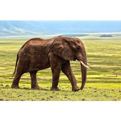 Elefánt kör alakú kreatív gyémánt kirakó