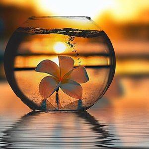 Nalpementés Orchidea négyzet alakú Gyémántszemes kirakó 30x30