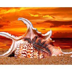 Tengerparti kagyló festés és gyémántszemes kreatív 40x50 cm-es hibrid kép