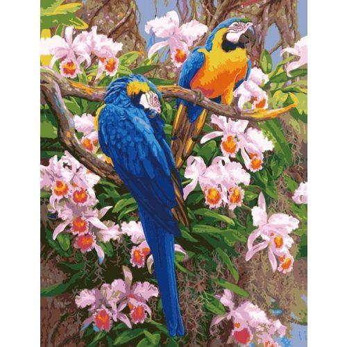 Papagályok festés számok alapján kreatív készlet kerettel