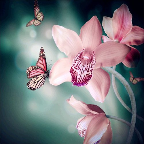 Orchidea Pillangókkal négyzet alakú kreatív gyémánt kirakó